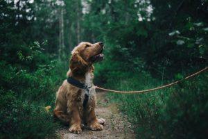 Dog: Exercising that won't feel like exercising